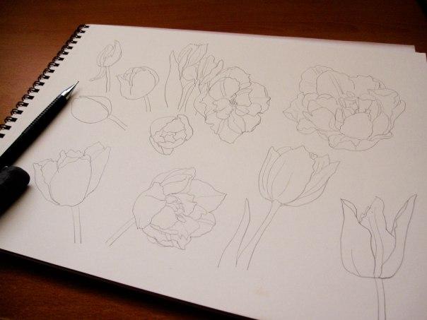 tulip_sketch