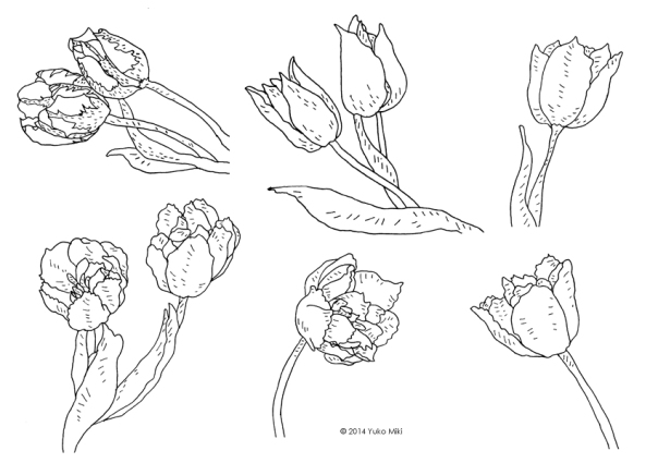 tulips_pen