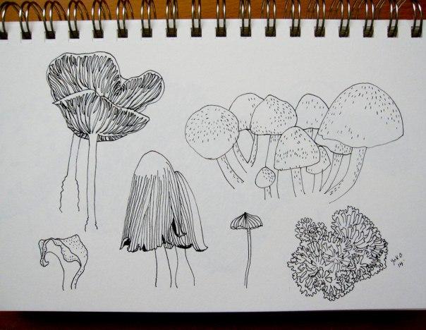 mushroom-sketch-01