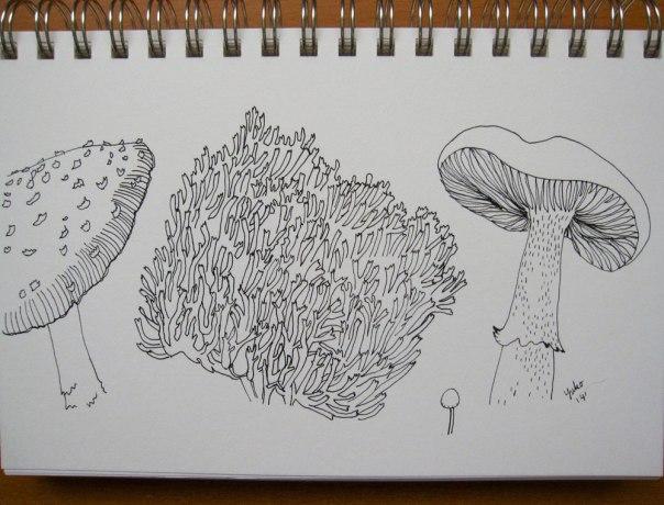 mushroom-sketch-02