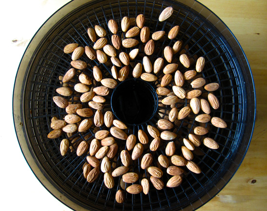 almonds-in-dehydrator_lores