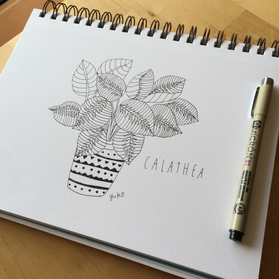 Calathea drawing