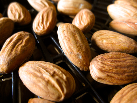 CU02_almonds-in-dehydrator_lores