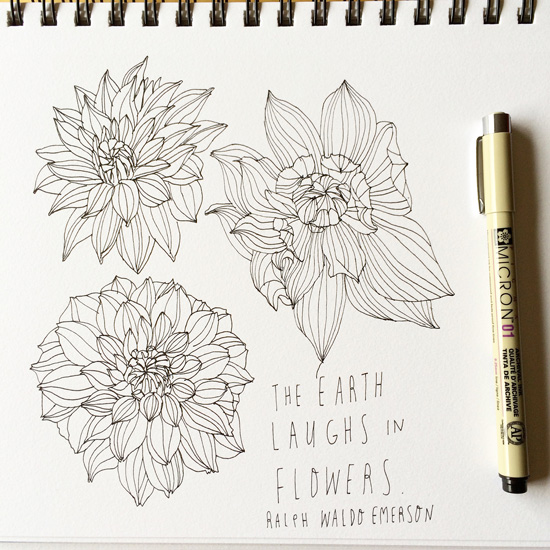 Dahlias-line-drawing_lores