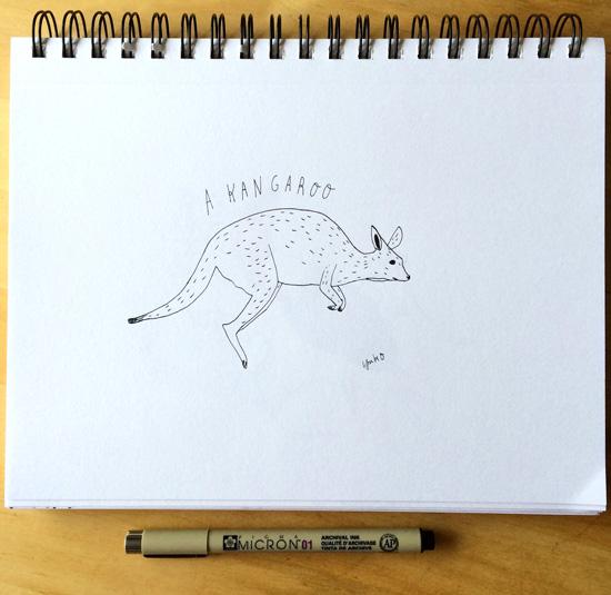 Kangaroo_lores