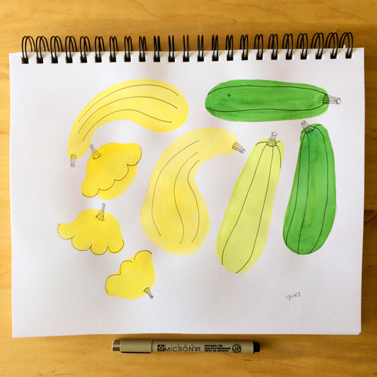Watercolor-squash_lores