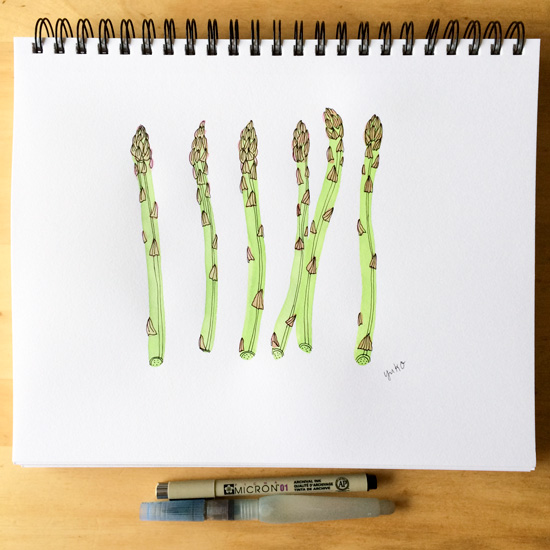 Asparagus-sketchbook_lores