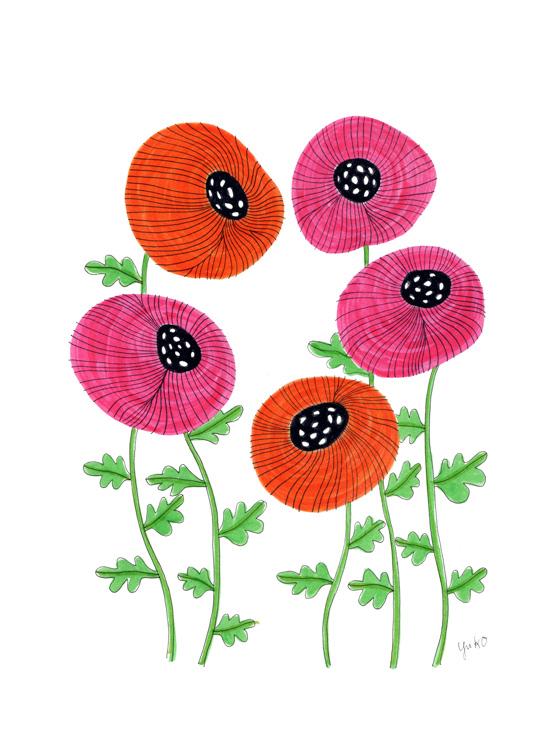 Orange and Pink Poppy Illustration