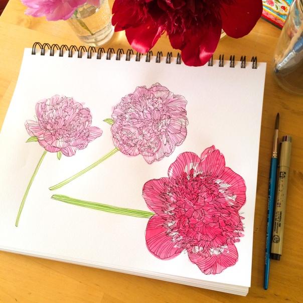Peonies-sketchbook_1000px